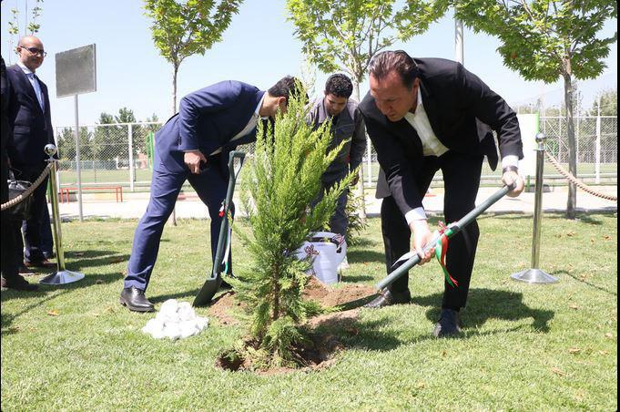 درختی که ویلموتس به یادگار کاشت