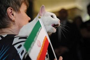 گربه روسی: ایران، امروز برنده است!