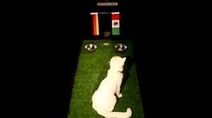 پیش بینی بلوط گربه ورزش سه پیش از بازی آلمان - مکزیک
