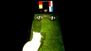 پیش بینی گربه ورزش سه از بازی بلژیک - پاناما