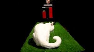 پیش بینی بلوط گربه ورزش سه از بازی پرتغال - مراکش