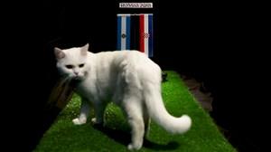 پیش بینی بلوط گربه ورزش سه از بازی آرژانتین - کرواسی