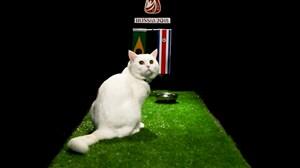 پیش بینی بلوط گربه ورزش سه از بازی برزیل - کاستاریکا