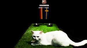 پیش بینی بلوط گربه ورزش سه از بازی آلمان-سوئد