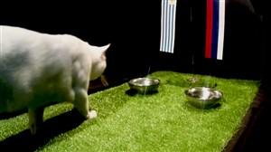 پیش بینی بلوط گربه ورزش سه از بازی اروگوئه - روسیه