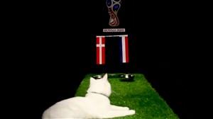 پیش بینی بلوط گربه ورزش سه از بازی دانمارک و فرانسه