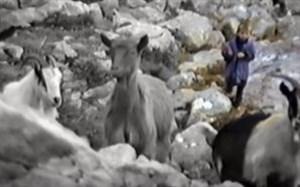 چوپانی مودریچ در کودکی