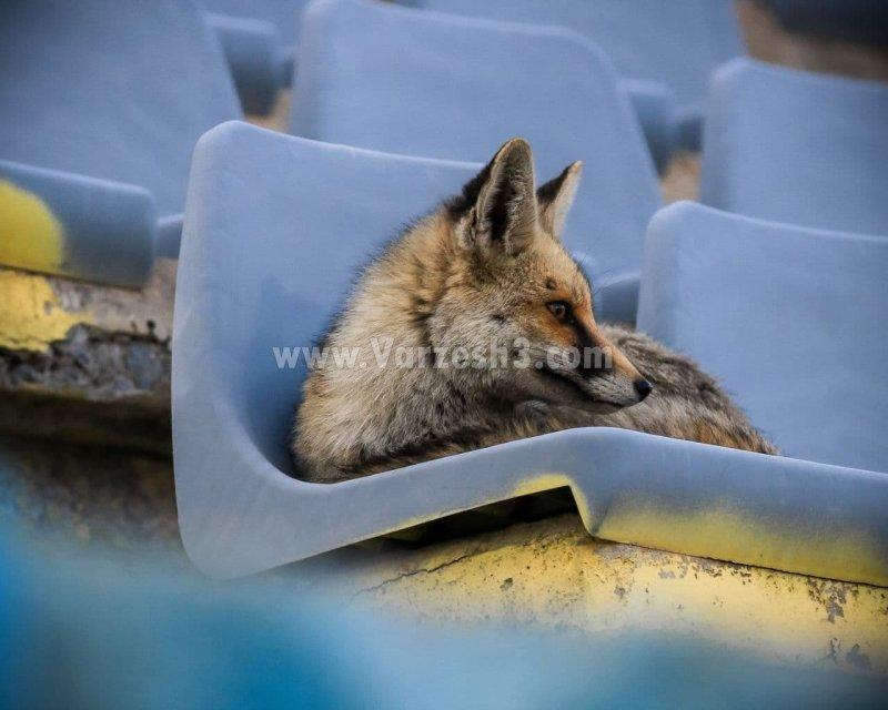 خاصترین تماشاگر لیگ برتر در افتتاحیه ۱۴۰۰(عکس)